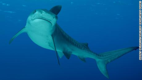 There's a rise in shark attacks, but the risk is low, study finds
