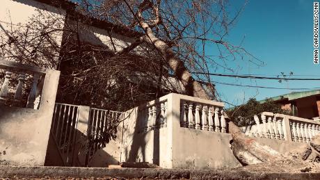 A fallen tree in Avenue Eduardo Mondhlane in Beira, Mozambique.