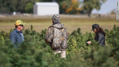 These hemp farmers are making a killing on the CBD industry