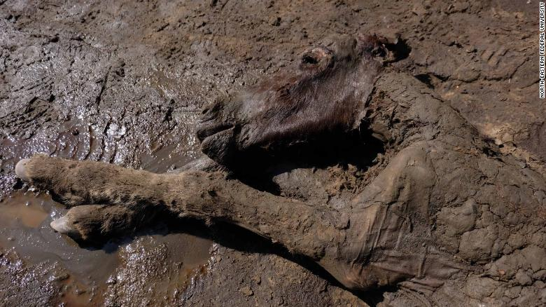 The foal was found in the Batagaika crater.