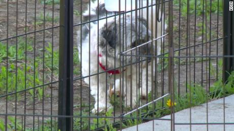 Iowa has confirmed multiple cases of a disease that can be transmitted from dogs to humans