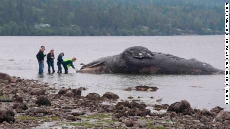 Washington State's coastal landowners are receiving an unusual request: take in dead whales