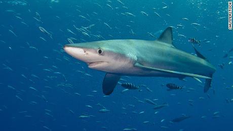 Internet user dies in suspected shark attack in Australia