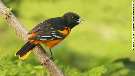 Birds are dying off at an alarming rate. Here's how you can help from your own backyard