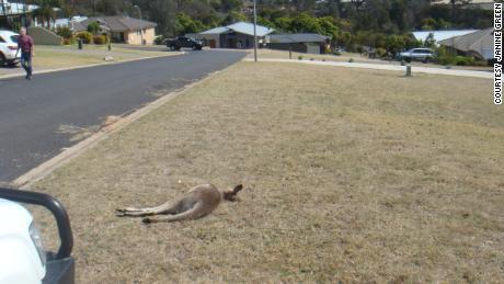 Teenager charged in Australia kangaroo hit-and-run massacre