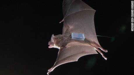 Vampire Bats Build Close Friendships And Help Each Other, Study Finds