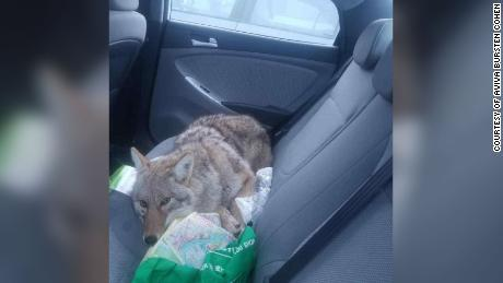 When You Re In The Back Seat And You Really Want To Be A Part Of
