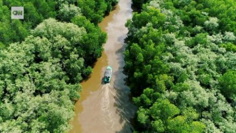 How Sri Lanka's mangrove forests can save lives