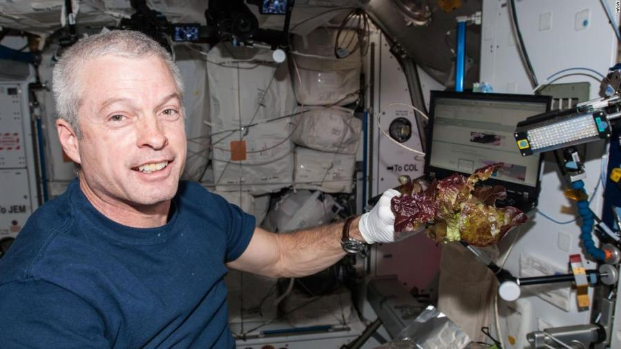 Space-grown lettuce is safe to eat, says study. Delicious, say astronauts 10