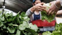 Coronavirus pandemic could threaten global food supply, warns UN