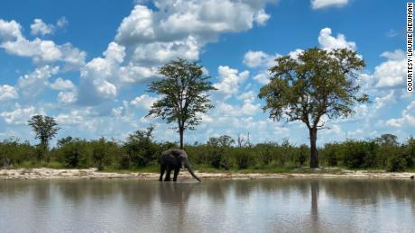 The safari industry is no stranger to hardship, but what will it take to recover now?