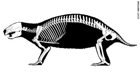 This depicts the reconstructed skeleton of Adalatherium hui, aka crazy beast, a newly discovered mammal from the Late Cretaceous period of Madagascar.