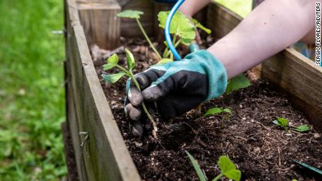 Humans need to drive the growth of gardening and how to start one