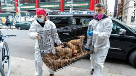 This is when their owner dies of coronavirus