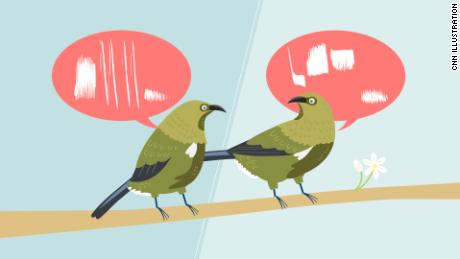 Birds aren't all singing the same song. They have dialects, too