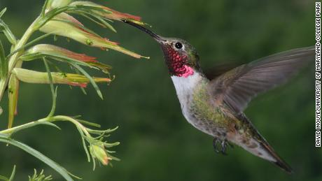 Hummingbirds can see an array of colors invisible to humans