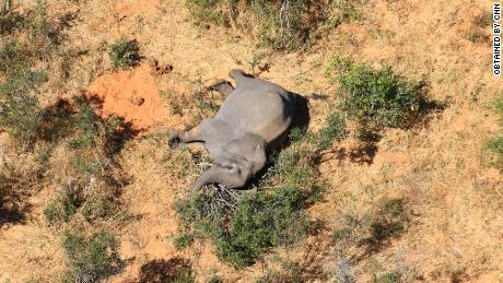 More than 360 elephants die from mysterious causes in Botswana