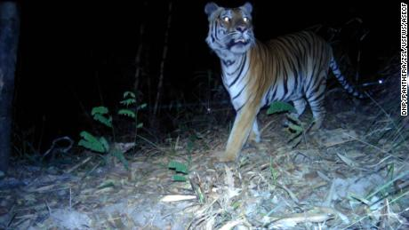 However, there are about 160 wild tigers left in Thailand.