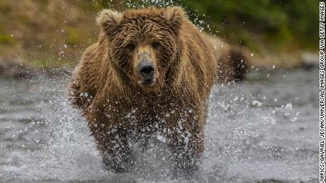 What not to do in a bear attack, according to the National Park Service