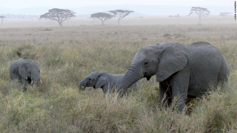 Human activity has fueled the decline in species, the report found.