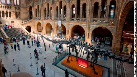 Towering dinosaur skeletons dominate natural history museums but it's tiny fossils, found trapped in amber, that have revolutionized paleontology in recent years.