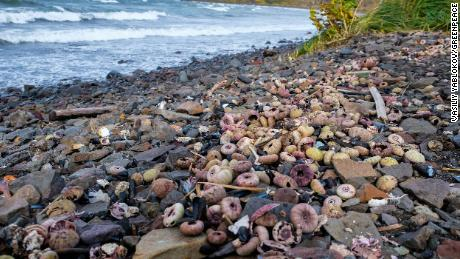 Large amounts of dead molluscs and other marine creatures were found onshore in the area of Khalaktyr beach.