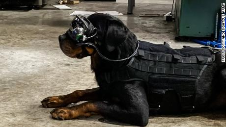 The goggles are custom-designed for each dog.