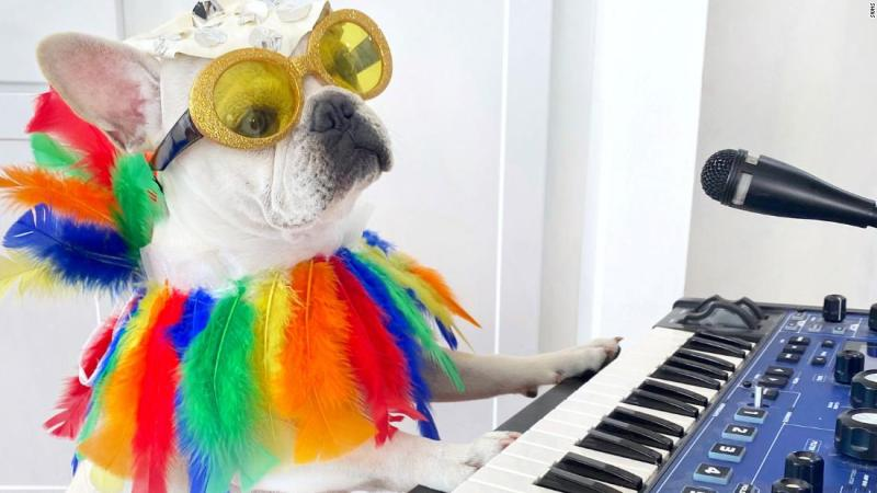 A French bulldog is wearing a different Halloween costume every day this month