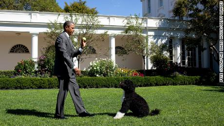Barack Obama and Bo at the White House in 2010.