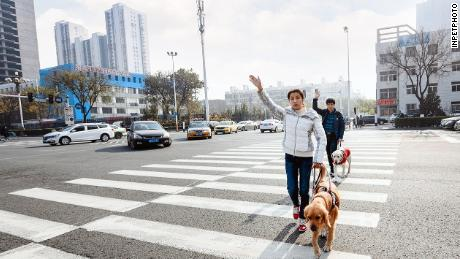 Yang Kang and his wife crossing a road with their guide dogs in Beijing, China.