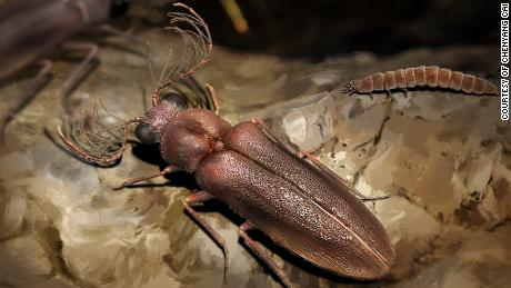 A 99 million year old beetle sheds light on the growth of glowing insects