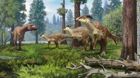 A depiction of a group of Parasrolophus dinosaurs being encountered by a persecutor in the subtropical forests of New Mexico 75 million years ago.