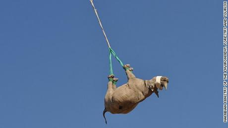 Why airlifting rhinos upside down is critical to conservation