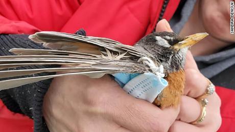 PPE Covid-19 litter kills wildlife