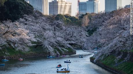 Cherry blossom at Ketanomaru Park in Tokyo, Japan on 23 March.
