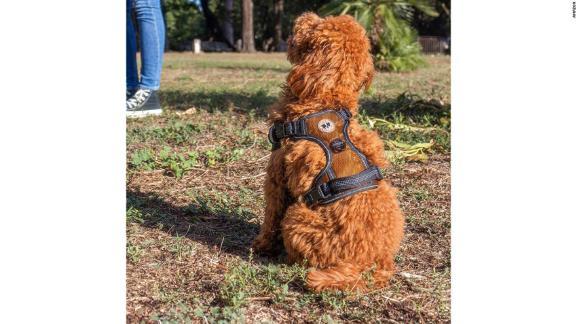 Zeus Da Bear Harness