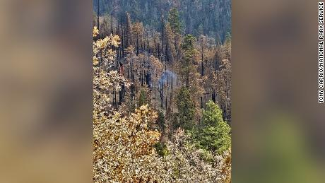 A giant Sequoia tree in California is still smoldering from last year's Castle Fire