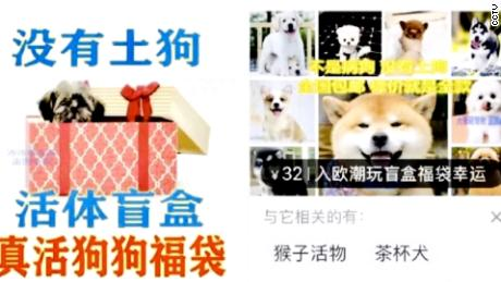 """Advertisements for pet mystery boxes which were shown on Chinese state broadcaster CCTV. The one on the left promises """"no native dogs,"""" while the other says """"no sick dogs."""""""
