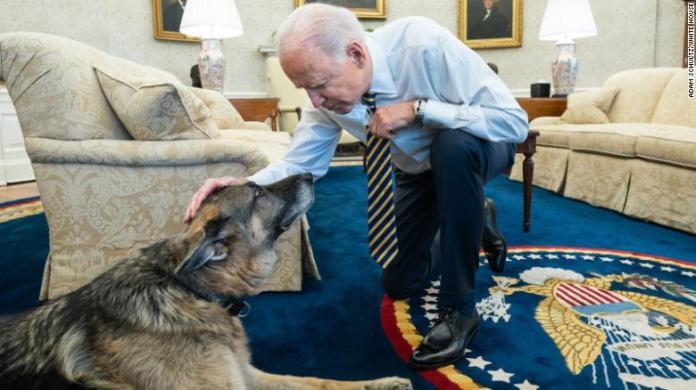 President Joe Biden pets the Biden family dog Champ in the Oval Office of the White House Wednesday, February 24, 2021.