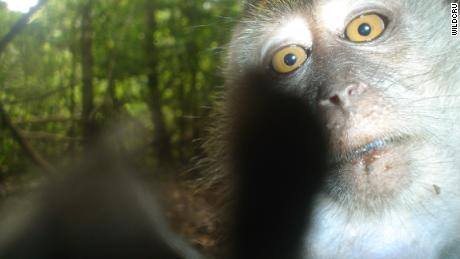 'Unseen Empire' turns a huge wildlife camera trap study into a game