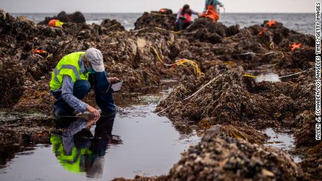 A team of biologists from the University of California Santa Cruz and Tenera Consulting firm assess the overall biological habitat by gauging the biodiversity of the Little Corona del Mar tide pools on Wednesday, October 6, 2021 in Newport Beach, California.