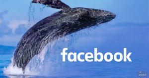 フェイスブック発行予定の仮想通貨グローバルコインに辛口評価|仮想通貨分析機関Diar
