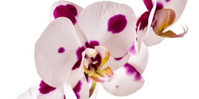 Curare Le Orchidee Sfiorite Cose Di Casa