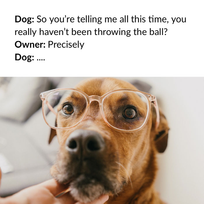 22 Dog Memes That Will Make You Laugh Out Loud Furtropolis