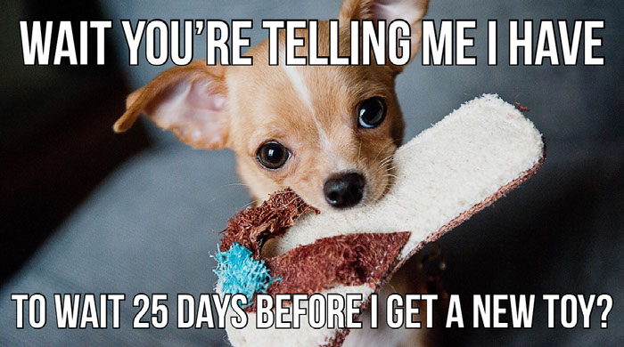 Create Your Own Dog Memes For Free Adobe Spark