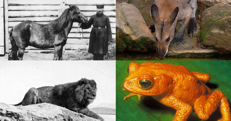 These Animals Have All Gone Extinct In The Last 100 Years     extinct animals
