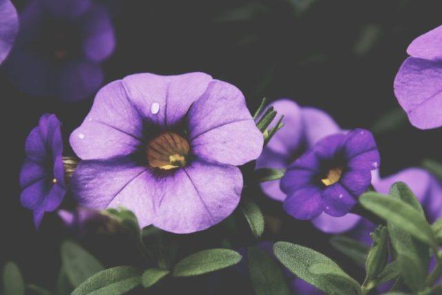 flowers-purple-plant-spring