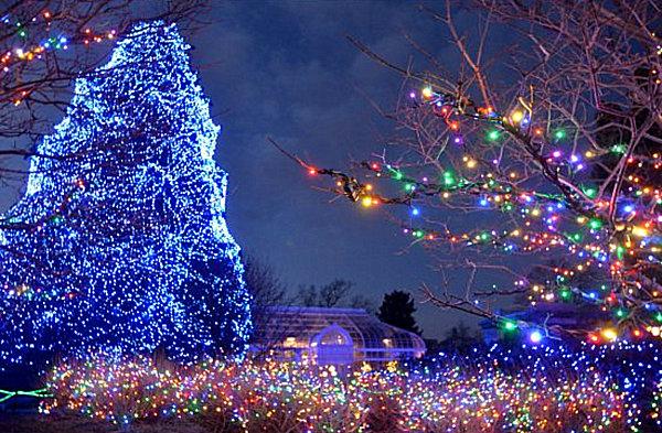 Toledo Zoo Holiday Lights