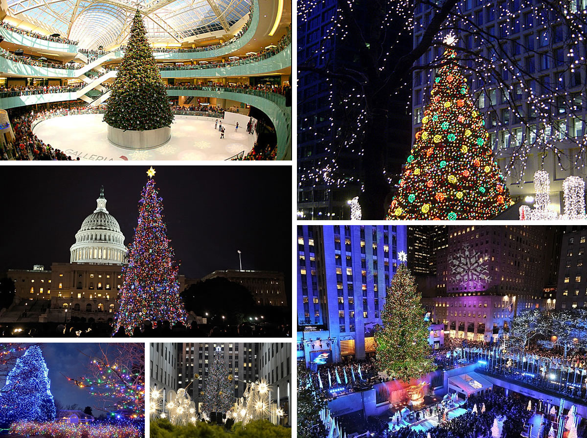 Top 10 Most Amazing Christmas Trees In The United States