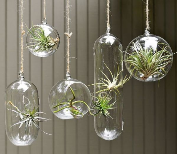 Indoor Gardens Glass Hanging Terrariums with Air Plants